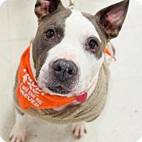 Adopt A Pet :: Rufus - Fredericksburg, VA