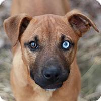 Adopt A Pet :: Arwen - Cookeville, TN