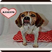 Adopt A Pet :: A332376 - St. Peters, MO