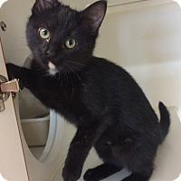 Adopt A Pet :: Jipsee - Breese, IL
