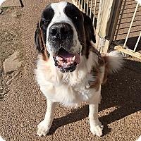 Adopt A Pet :: Hector - McKinney, TX