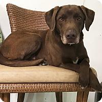 Adopt A Pet :: Goose - Los Angeles, CA