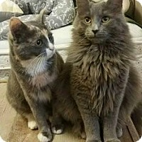 Adopt A Pet :: Delilah and Daisy - Irwin, PA