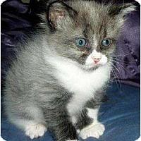 Adopt A Pet :: Goofy - Gilbert, AZ