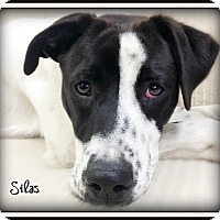 Adopt A Pet :: Silas - Pascagoula, MS