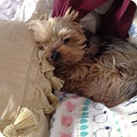 Adopt A Pet :: Riley (Papa) - Los Angeles, CA