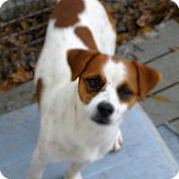 Adopt A Pet :: Poppy - Okeechobee, FL