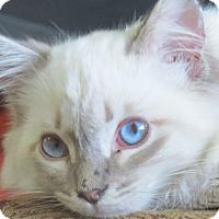 Adopt A Pet :: Elvis - Davis, CA