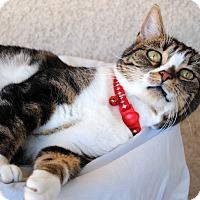 Adopt A Pet :: Abby - Palmdale, CA