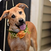Adopt A Pet :: Hope - Baton Rouge, LA