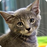 Adopt A Pet :: Bobble - Sarasota, FL
