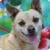 Adopt A Pet :: JOJO - Red Bluff, CA