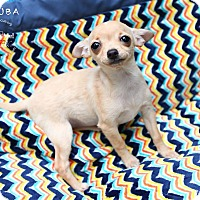 Adopt A Pet :: Aruba - Shawnee Mission, KS