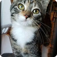 Adopt A Pet :: PJ - Geneseo, IL
