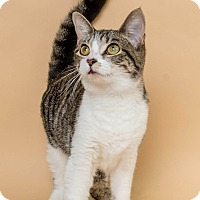 Adopt A Pet :: Leona - Wyandotte, MI
