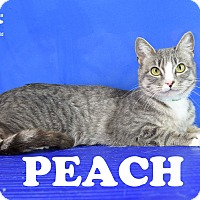Adopt A Pet :: Peach - Carencro, LA