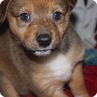 Adopt A Pet :: Elaine - Raleigh, NC
