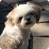 Adopt A Pet :: Cookie - Fort Wayne, IN