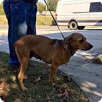 Adopt A Pet :: Emma - Spring Valley, NY