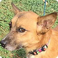 Terrier (Unknown Type, Small) Mix Dog for adoption in Lexington, Kentucky - Buddy