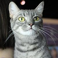 Adopt A Pet :: Beatrix H - Raleigh, NC