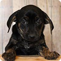 Adopt A Pet :: Joplin - Waldorf, MD