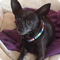 Adopt A Pet :: Scarlett - Davie, FL