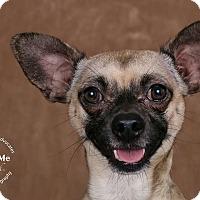 Adopt A Pet :: Timone - Cincinnati, OH