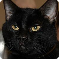 Adopt A Pet :: BOWIE - Clayton, NJ
