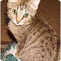 Adopt A Pet :: Akono - Dallas, TX