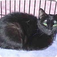 Adopt A Pet :: Blossom - Colmar, PA