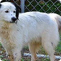 Adopt A Pet :: Nate - Dandridge, TN