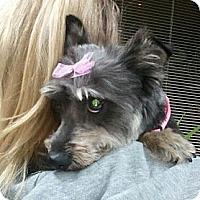 Adopt A Pet :: Kona - Encinitas, CA