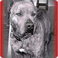 Adopt A Pet :: Rommell - Newcastle, OK