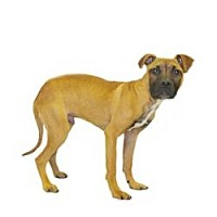 Adopt A Pet :: Bart - Inverness, FL