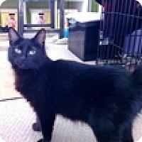 Adopt A Pet :: Mishka - Vancouver, BC