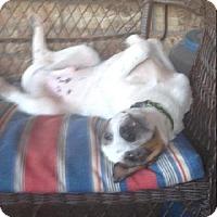 Adopt A Pet :: Mason - Odessa, TX