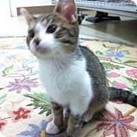 Adopt A Pet :: Boggle - Trevose, PA