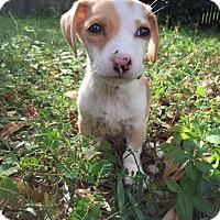 Adopt A Pet :: Booger - Gainesville, FL