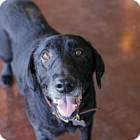 Adopt A Pet :: Buster - San Antonio, TX