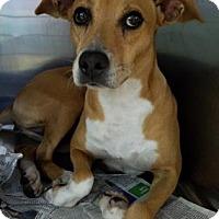 Adopt A Pet :: S/C Maricruz - Miami, FL