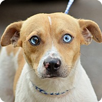 Mountain Cur Mix Dog for adoption in Washington, Georgia - Junior