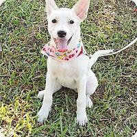Adopt A Pet :: Cassie - Castro Valley, CA