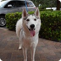 Adopt A Pet :: Grace - Jupiter, FL