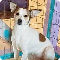 Adopt A Pet :: Naomi - Holliston, MA