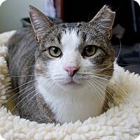 Adopt A Pet :: Sinnie - Bethesda, MD