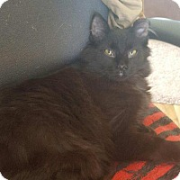Adopt A Pet :: Jinx - Kenosha, WI