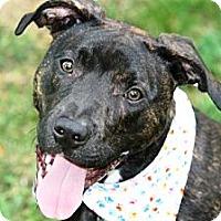 Adopt A Pet :: Lexi - Covington, KY
