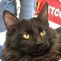 Adopt A Pet :: Ralphie - Winchester, CA