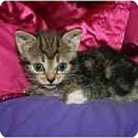 Adopt A Pet :: Boleyn - Arlington, VA